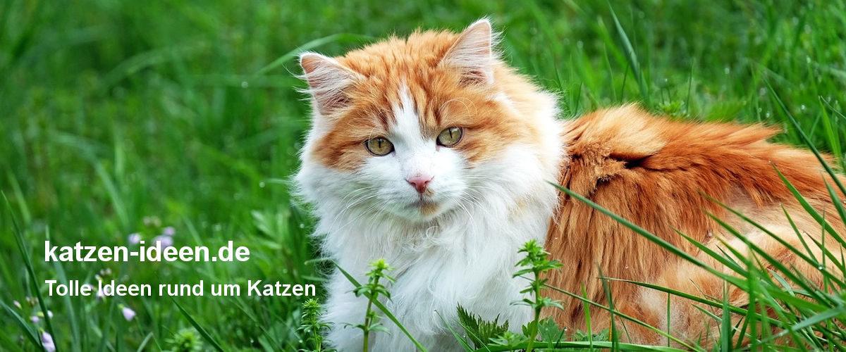 katzen-ideen.de - Tolle Ideen rund um Katzen